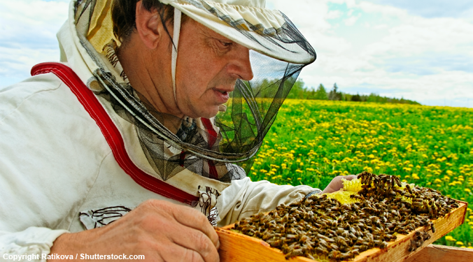 Urban beekeeping takes off as plight of the honeybee wins public attention