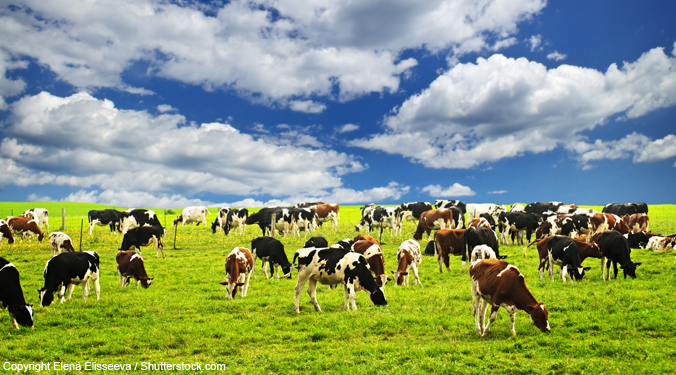 The future of the Canadian dairy industry's supply chain management is up for discussion