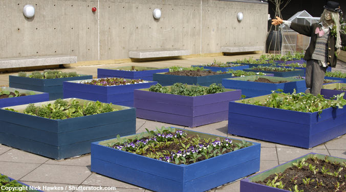 How to transform a vacant lot into a community garden